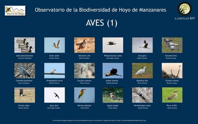 2-lamina_aves_1hoyo_visualiuzar (Copiar)