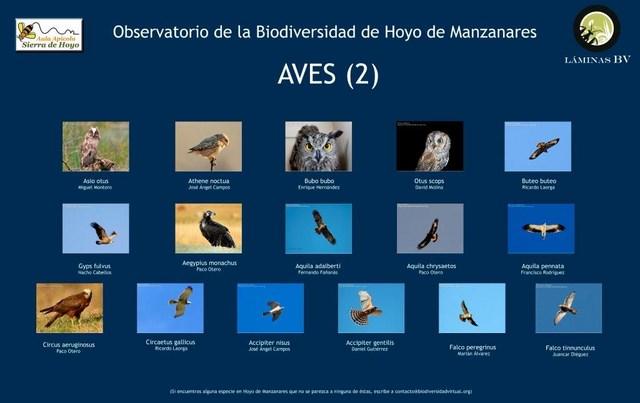 2-lamina_aves_2_hoyo_visualizar (Copiar)