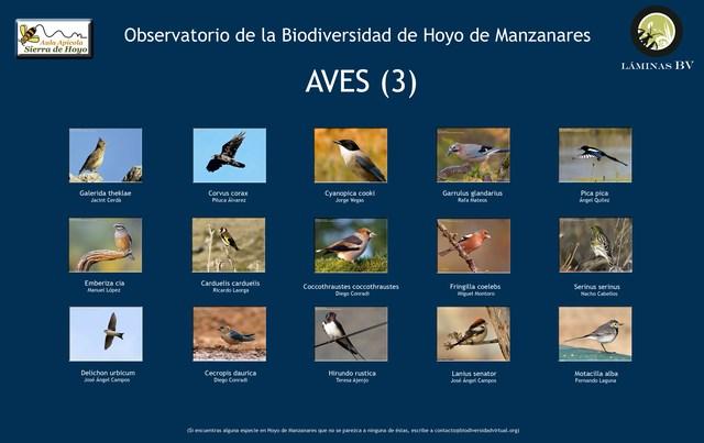 2-lamina_aves_3_hoyo_visualizar (Copiar)