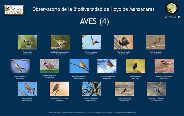 2-lamina_aves_4_hoyo_visualizar (Copiar)