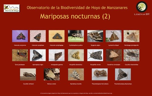 2-lamina_noctuidos_hoyo_visualizar (Copiar)