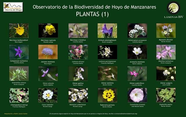 2-lamina_plantas_1_hoyo_visualizar (Copiar)