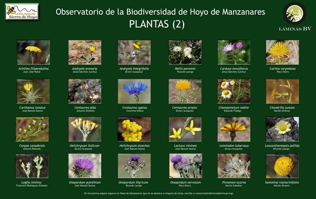 2-lamina_plantas_2_hoyo_visualizar (Copiar)