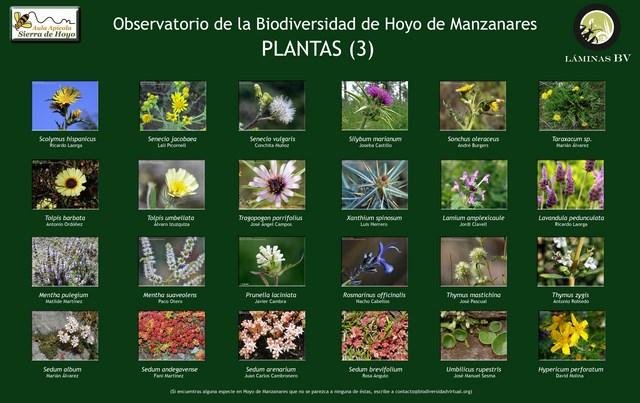 2-lamina_plantas_3_hoyo_visualizar (Copiar)