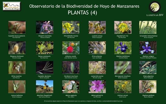 2-lamina_plantas_4_hoyo_visualizar (Copiar)