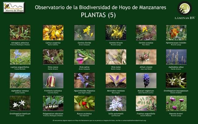 2-lamina_plantas_5_hoyo_visualizar (Copiar)