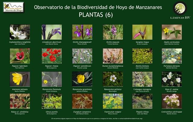 2-lamina_plantas_6_hoyo_visualizar (Copiar)