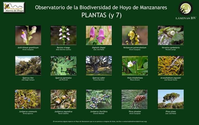 2-lamina_plantas_7_hoyo_visualizar (Copiar)