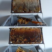 Productos de las abejas: La castra de las colmenas