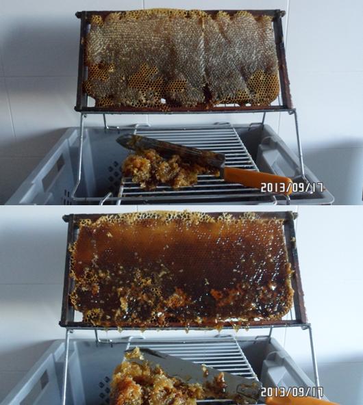 Productos de las abejas : extracción de la miel