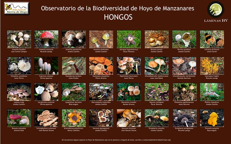 Biodiversidad de Hoyo de Manzanares: Hongos