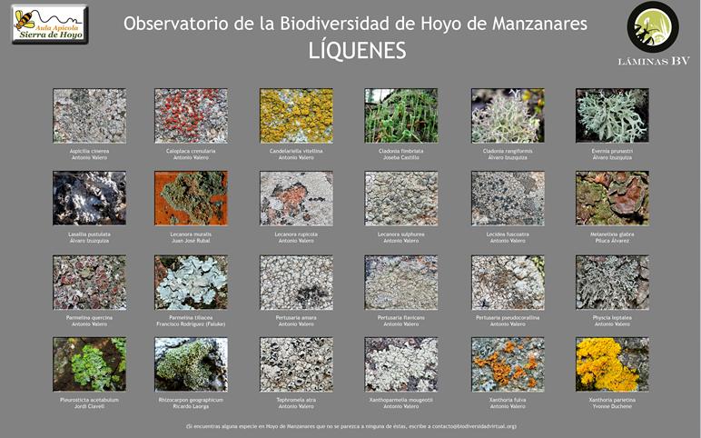 Biodiversidad de Hoyo de Manzanares: Líquenes