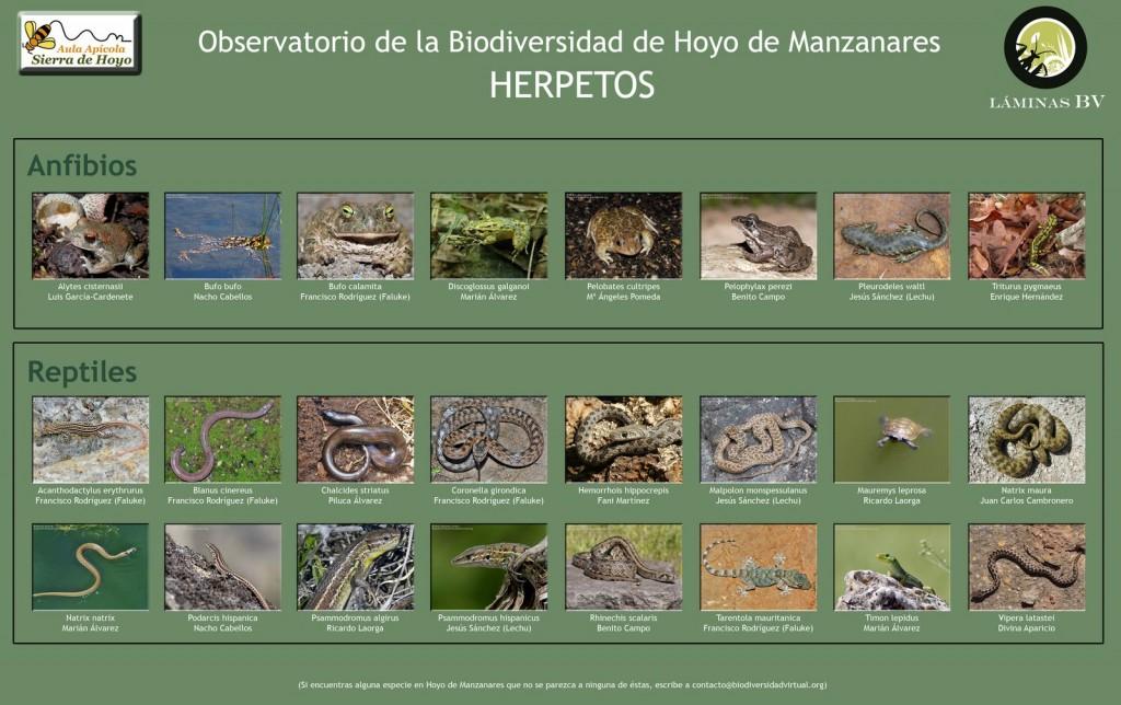 Biodiversidad de Hoyo de Manzanares : Herpetos