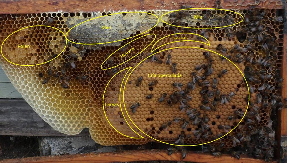 revisión primaveral de las colmenas