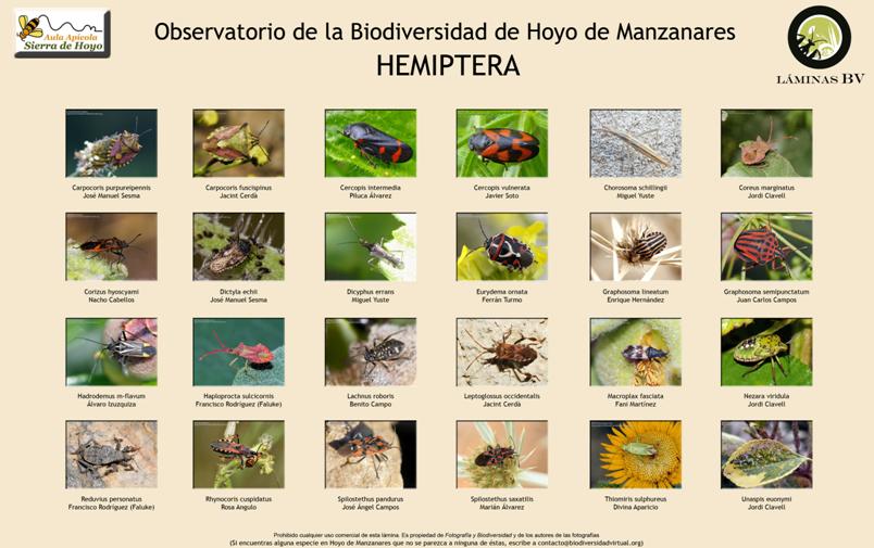 Biodiversidad de Hoyo de Manzanares