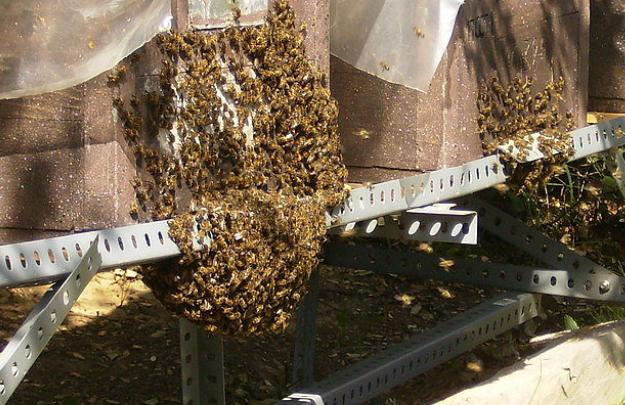 la barba de la colmena de abejas