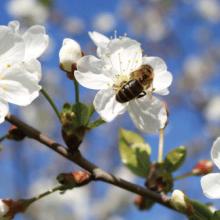 Relatos sobre abejas y polinización (III)