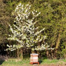 Relatos sobre abejas y polinización (II)
