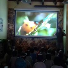 Educación ambiental: Animales de mi jardín