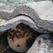 ¿Problemas con abejas?