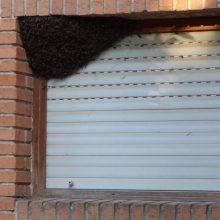 La problemática de los enjambres de abejas