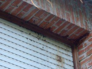 Colonia de abejas establecida en persiana