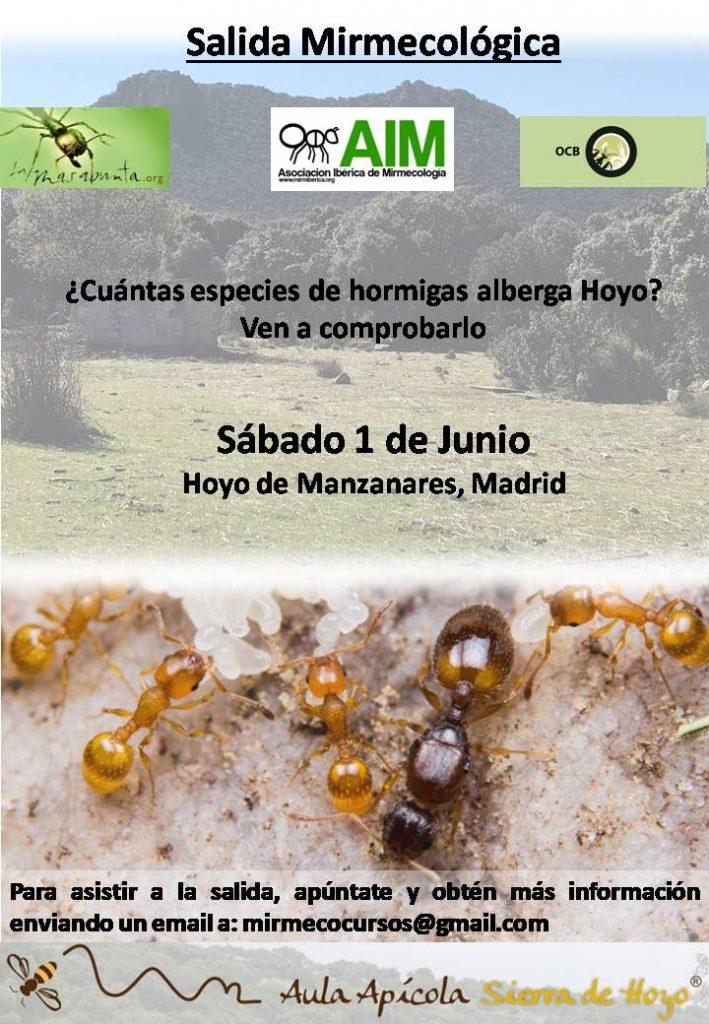 curso hormigas