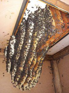 La vivienda de las abejas