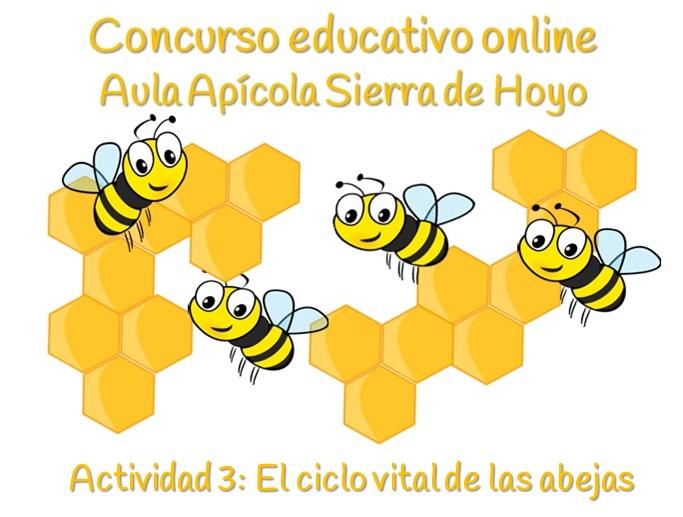 Ciclo vital de las abejas