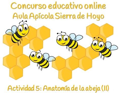 anatomia de la abeja
