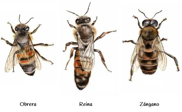 Habitantes de la colmena