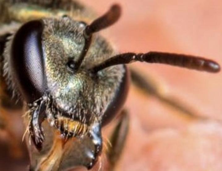 vista de las abejas