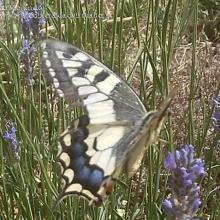 Estudio sobre las mariposas de Hoyo de Manzanares
