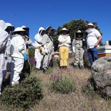 Sanidad apícola. Colaboración con la Facultad de Veterinaria de la UCM.