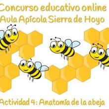 Concurso Apícola. Ficha 4