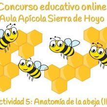 Concurso Apícola. Ficha 5